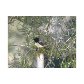 WILLY WAGTAIL IN TREE IN RURAL AUSTRALIA CANVAS PRINT
