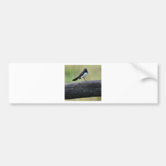 WILLY WAGTAIL ON FENCE QUEENSLAND AUSTRALIA BUMPER STICKER