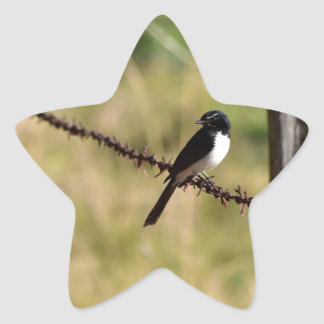 WILLY WAGTAIL ON FENCE RURAL QUEENSLAND AUSTRALIA STAR STICKER