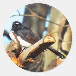 willy wagtail round sticker