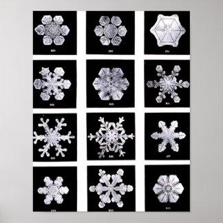 Wilson Bentley Snowflakes Poster