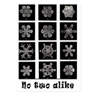 Wilson Bentley's Snowflakes, 1902 Postcard