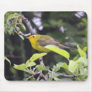 Wilson's Warbler Mouse Pad