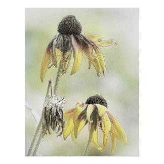 Wilted Black Eyed Susans Posters