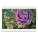 wilted rose cards