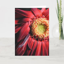 Wilting Red Daisy Card