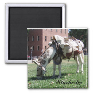 Winchester the donkey Magnet