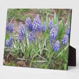 Wind Blown Grape Hyacinths Photo Plaque