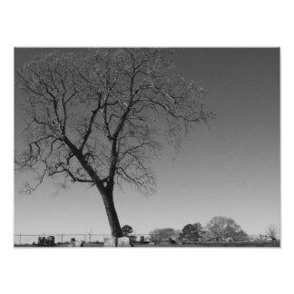 Wind Blown Photo Enlargement