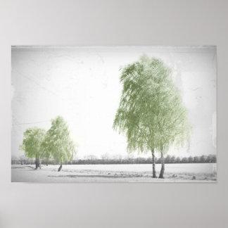 Wind in the Birken Poster