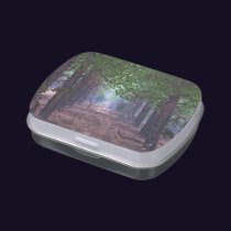 Wind in the Pines Candy Tin