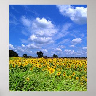 Wind Swept, Sunflowers (PRINT) Poster