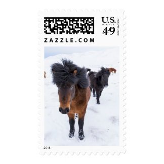 Windblown Icelandic Horse Postage