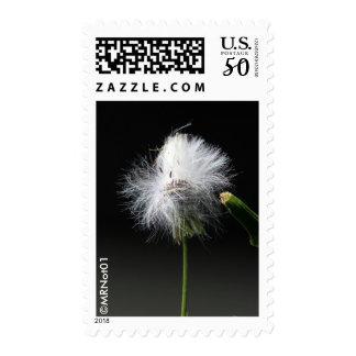 Windblown Postage