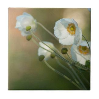 windflowers blancos en una exhibición natural azulejo cuadrado pequeño