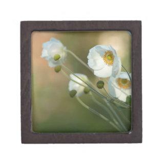 windflowers blancos en una exhibición natural cajas de regalo de calidad