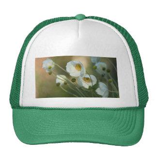Windflowers blancos en una exhibición natural gorras