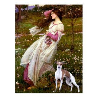 Windflowers - Italian Greyhound 7 Postcard