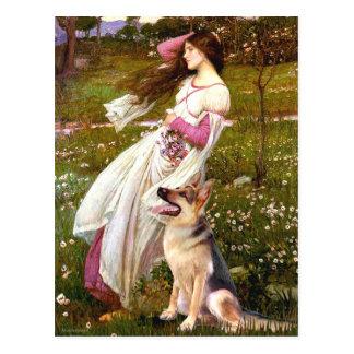 Windflowers - pastor alemán 1 postales