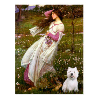 Windflowers - Westie 2 Postcard