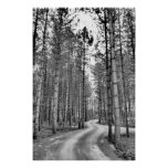 Winding Path Print