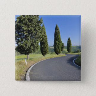 Winding Road Lined with Cypress Trees, Val Button