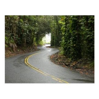 Winding roads through rainforest, Island of Postcard