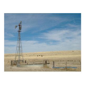 Windmill and cattle under western Kansas Skies Postcard