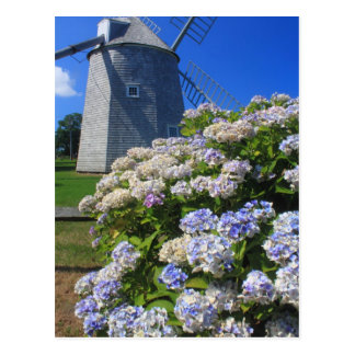 Windmill and Hydrangeas Cape Cod Postcard