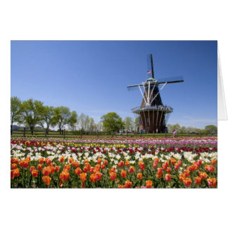 Windmill Island park with tulips in bloom at Greeting Card