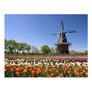 Windmill Island park with tulips in bloom at Postcard