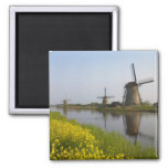 Windmills along the canal in Kinderdijk, 2 Inch Square Magnet