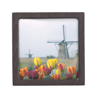 Windmills and tulips along the canal in gift box