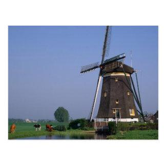 Windmills, Leidschendam, Netherlands Postcard