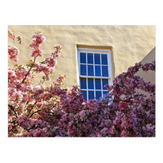 Window & Blossoms Postcard