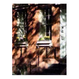 Window Boxes Greenwich Village Postcard
