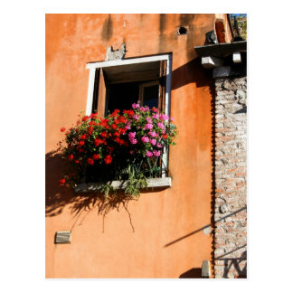 Window Flowers Postcard