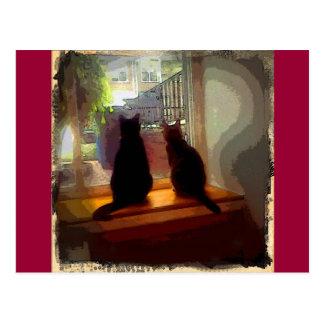 Window Gazing Kitties CB Postcard