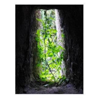 Window Plant Postcard