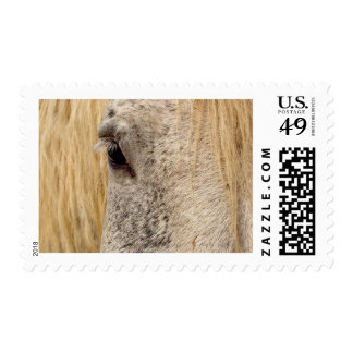 Windows to the Soul Postage Stamp