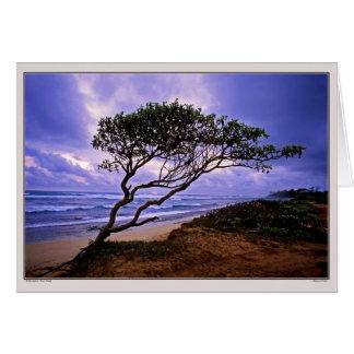Windsculpture - Maui - Hawaii Cards