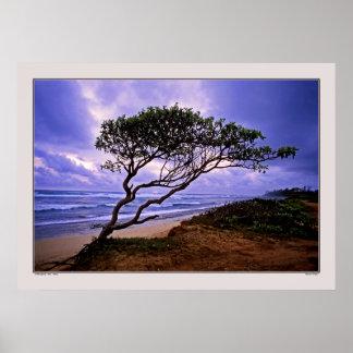 Windsculpture - Maui - Hawaii Posters