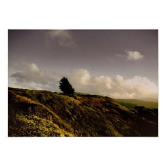 Windswept and Alone Poster
