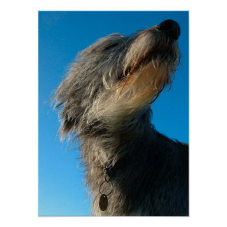 Windswept dog posters