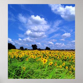 Windswept fields ans sky poster