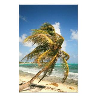 Windswept Palm and the Caribbean Sea Photograph