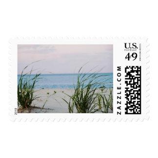 Windswept Postage Stamp