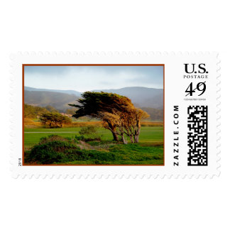 Windswept Trees Postage Stamp