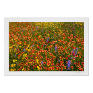 Windy Field of Texas Wildflowers Poster