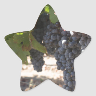 Wine Country Grapes Star Sticker